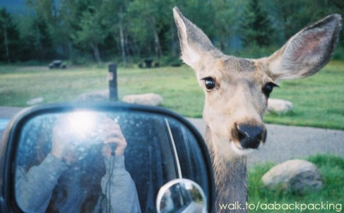 Alicia photographs a deer from the car